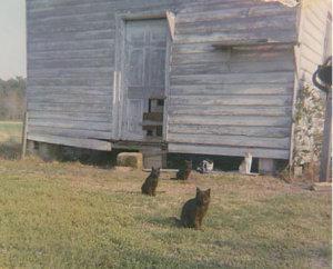 mlgrandmotherscats